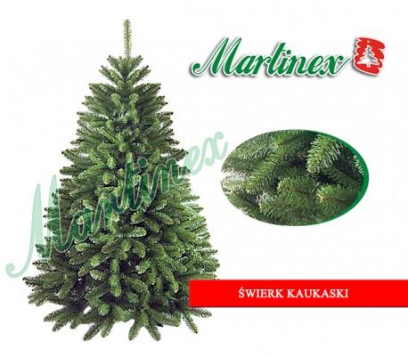 Świerk kaukaski 250cm